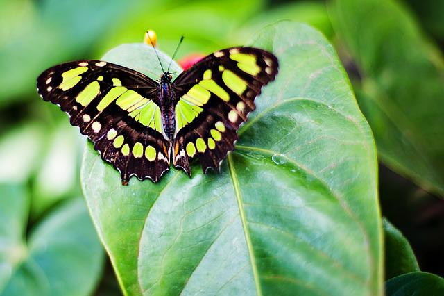 Butterfly, Nature, Spring, Insect, Garden, Green Leaf