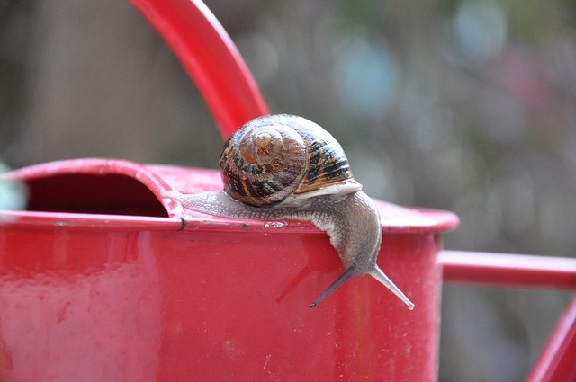 Snail, Watering Can, Garden, Rain, Nature, Insects