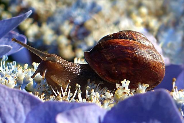 Animal, Mollusk, Snail, Land Snail, Shell, Garden