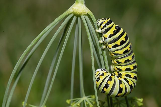 Caterpillar, Insect, Larva, Garden