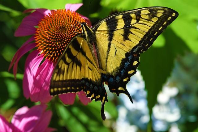Butterfly, Nature, Garden, Lepidoptera, Flora, Summer