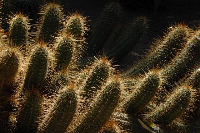 Cactus, Morocco, Garden, Light, Marrakech, Exotic
