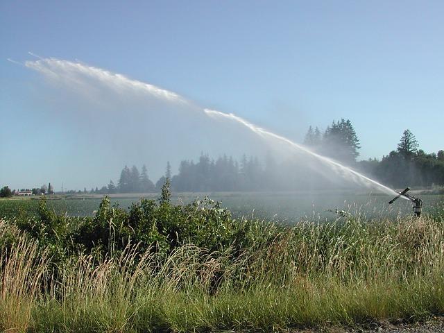 Rainmaker, Sprinkler, Farming, Grass, Mint, Garden