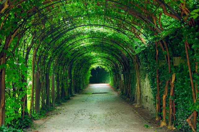 Green, Tunnel, Natural, Garden, Salzburg