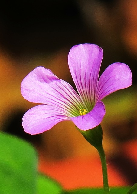 Nature, Flower, Plant, Petal, Outdoor, Leaf, Garden