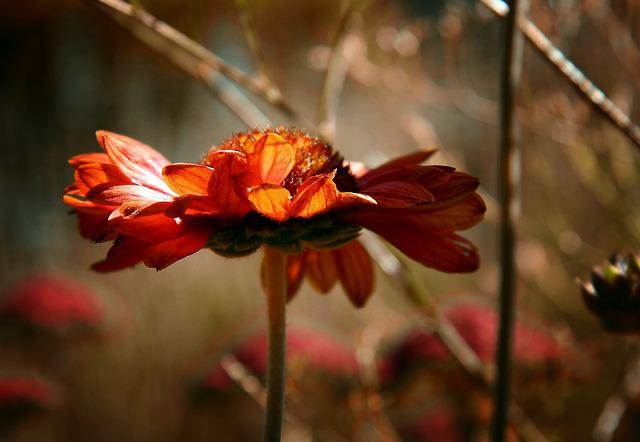 Nature, Flower, Plant, Outdoor, Garden, Season, Color