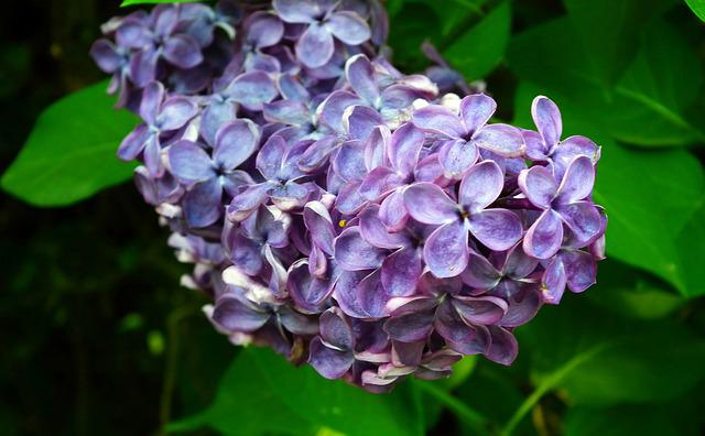 Nature, Plant, Flower, Without, Blue, Leaf, Garden