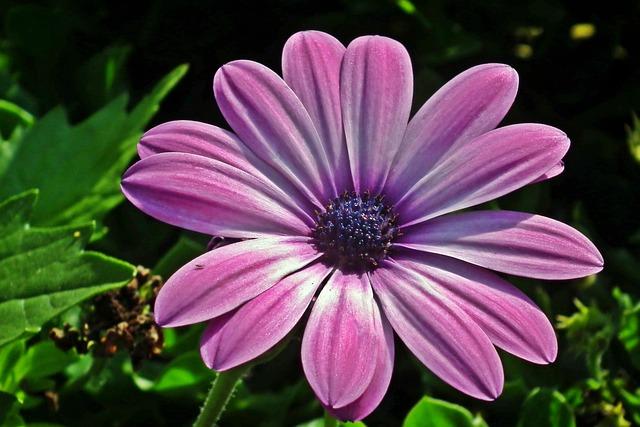 Nature, Flower, Plant, Summer, Garden, Blooming