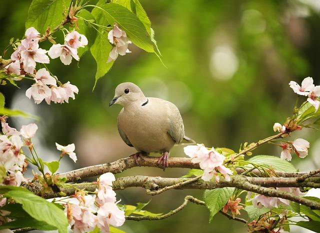 Animal World, Bird, Nature, Songbird, Dove, Garden