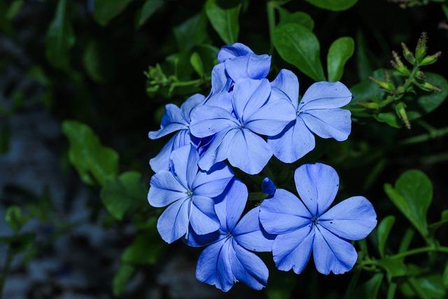 Blue Flower, Nature, Garden, The Dusky Fog