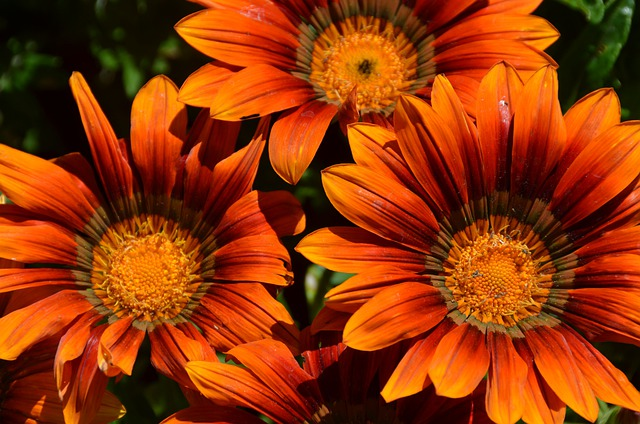 Flowers, Blossom, Bloom, Orange, Plant, Garden, Summer