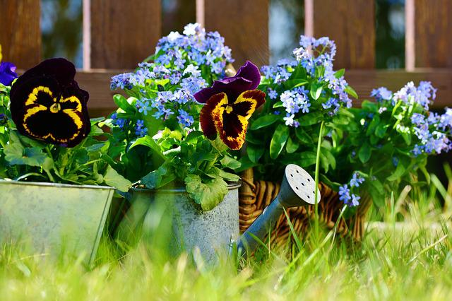 Garden, Flowers, Pansy, Forget Me Not, Plant