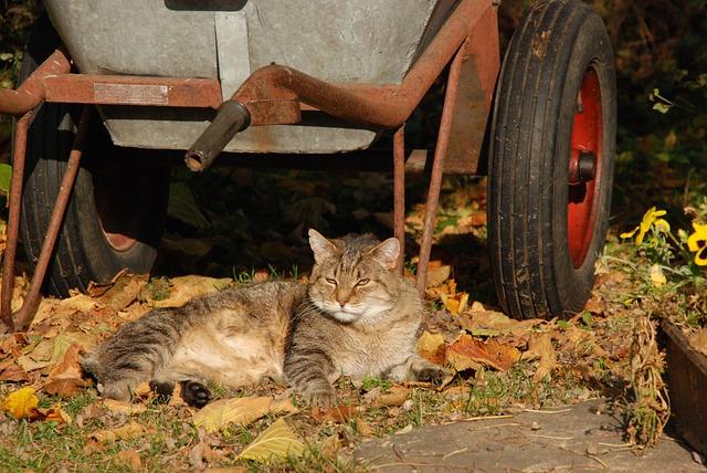 Cat, Sun, Lazy, Pet, Wheelbarrow, Garden