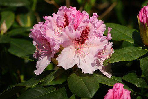 Flower, Plant, Nature, Garden, Leaf, Petal, Flowers