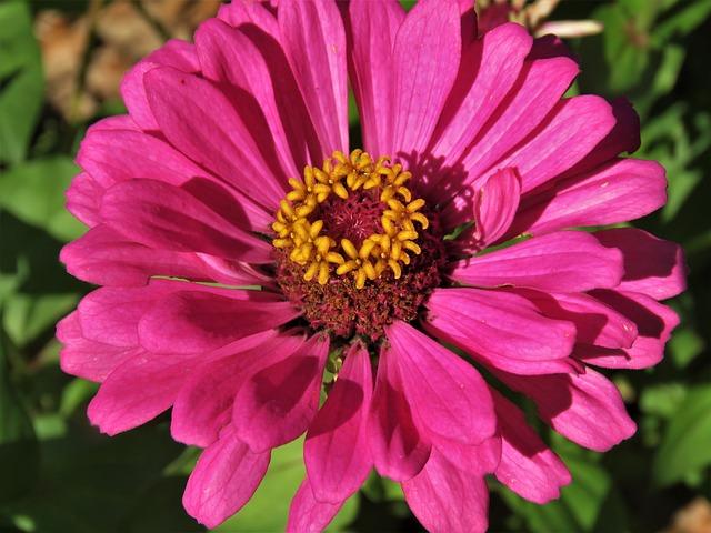 Flower, Pink, Yellow, Garden