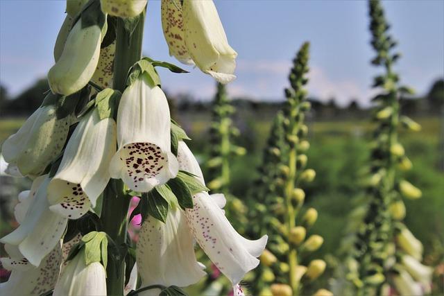 White, Cinquefoil, Coil, Plant, Garden, Toxic, Close Up
