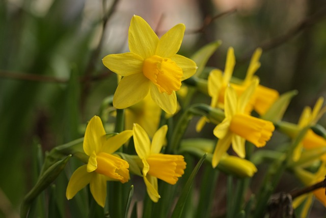 Nature, Plant, Flower, Leaf, Garden, Spring, Easter