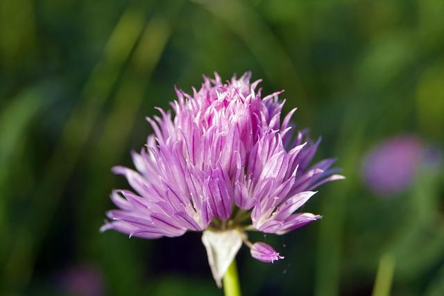 Flower, Violet, A Garden Plant, Garden, Plant