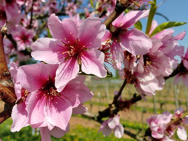 Flower, Nature, Plant, Flowers, Garden, Spring, Close