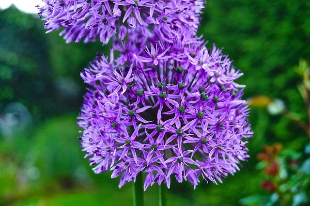 Nature, Plant, Flower, Summer, Garden, Spring, Flora