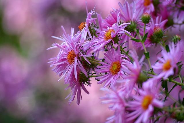 Flower, Nature, Plant, Garden, Petal, Color, Floral
