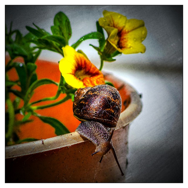 Snail, Flower, Pot, Garden, Summer, Shell, Orange