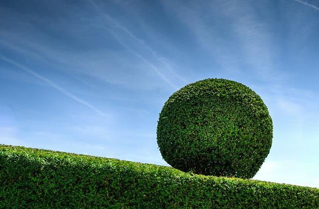 Boxwood, Green, Blue, Sky, Nature, Garden, Bush, Plant
