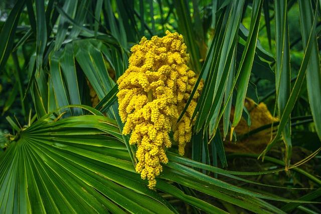 Palma, Spring, Garden, Nature