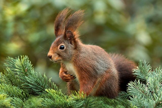 Squirrel, Attention, Ears, Cute, Garden