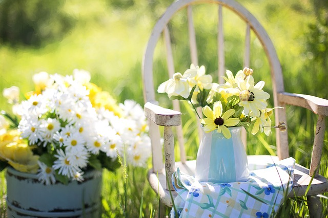 Summer, Still-life, Daisies, Yellow, Garden, Flowers