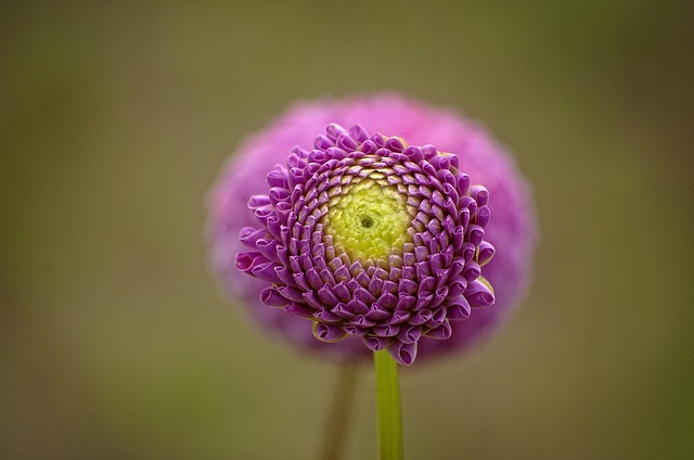Flower, Garden, Flower Garden, Close, Flora, Summer