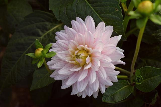 Flower, Nature, Plant, Garden, Leaf, Summer, Flowers