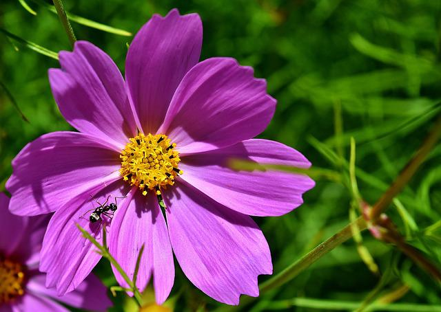 Flower, Purple, Ant, Insect, Nature, Garden, Summer