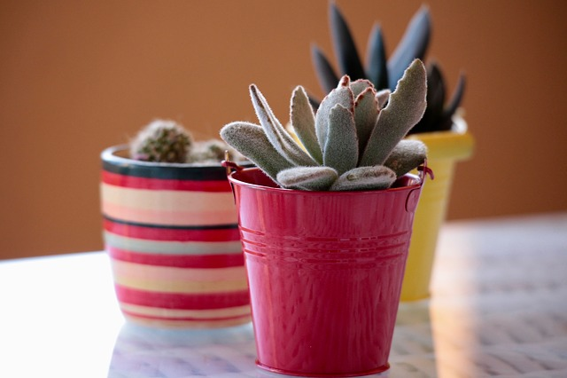 Plants, Cactus, Succulent Plant, Spring, Summer, Garden