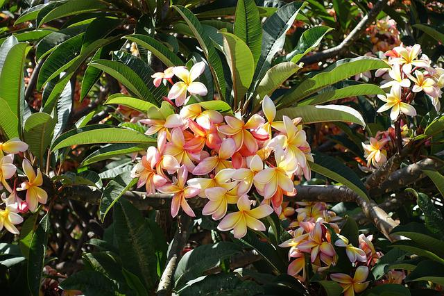 Flowers, Flower, Nature, Plants, Garden, Spring, Summer