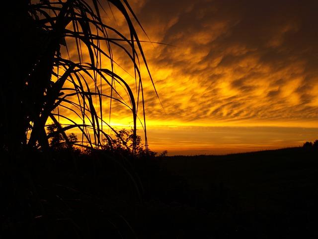 Sunset, Schorfheide, Garden
