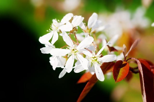 Flowers, White, Spring, Tree, Ornamental Tree, Garden