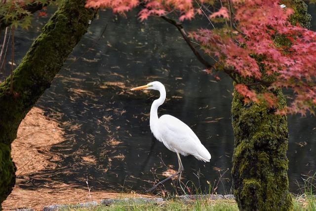Animal, Garden, Pond, Water, Wood, Bird, Wild Birds