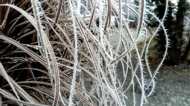 Crystals Of Dreams, Frost, Thin, Rushes, Garden, Winter