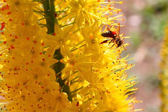 Summer, Bee, Yellow, Flower, Nature, Garden, Leaf