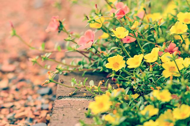 Flowers, Natural, Garden, Yellow, Plant, Flower Bed