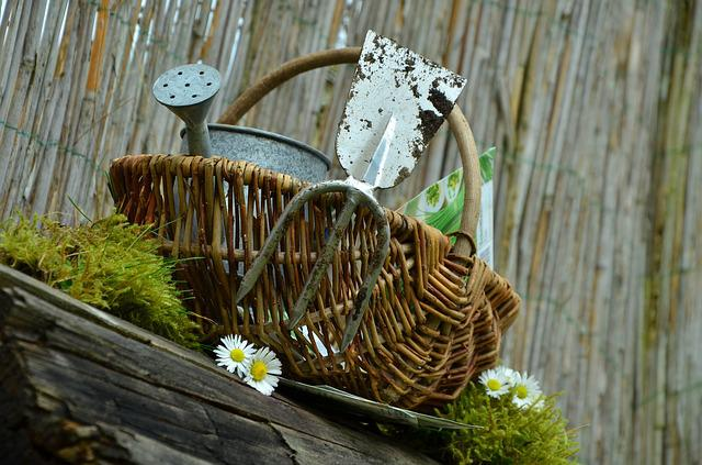 Garden, Gardening, Hoe, Garden Tools, Sow, Plant