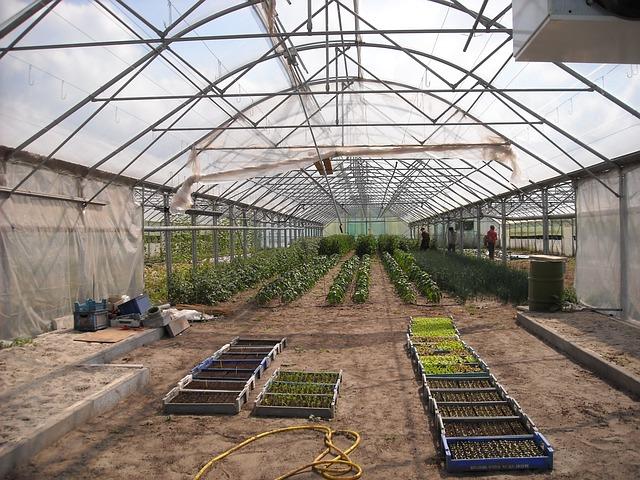 Agriculture, Gardening, Vegetables, Growing, Breeding