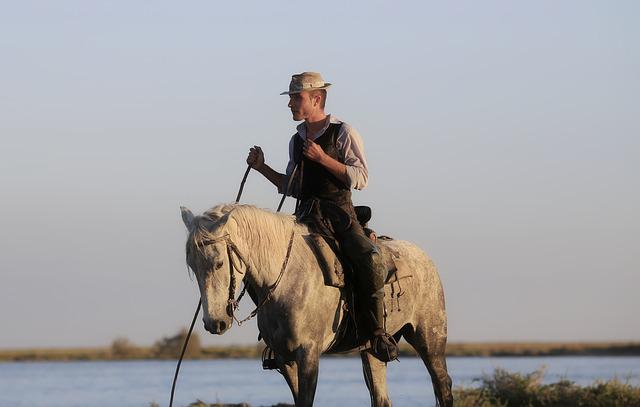 Gardian, Horse, Horses, Camargue, Animal, White, Hiking