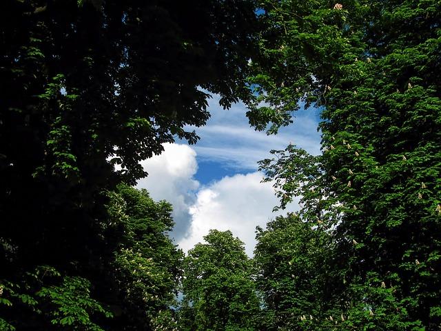 Tree, Trees, Park, Sky, Heaven, Window, Gate, Clouds