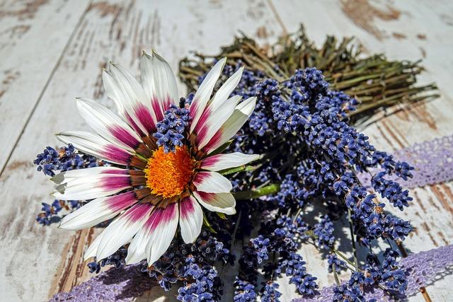 Gazania, Flower, Gazanie, Blossom, Bloom, Bright