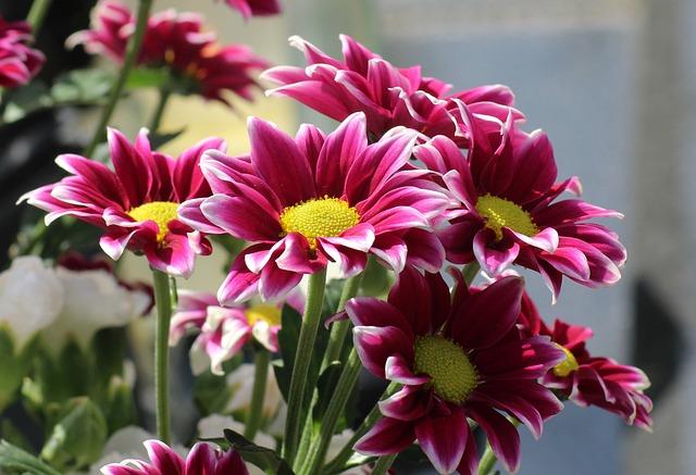 Gazanie, Flowers, Bouquet, Purple, Gazania, Figure, Red
