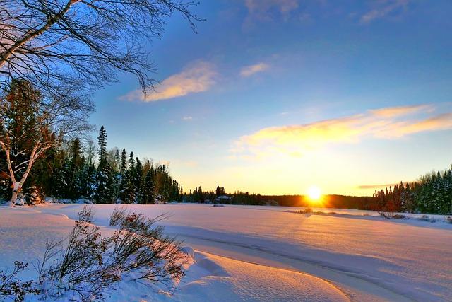 Sunset, Winter, Snow, Cold, Gel, Trees, Birch, Fir