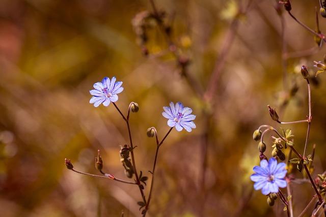 Pyrénées-storchschnabel, Geranium Pyrenaicum, Flower