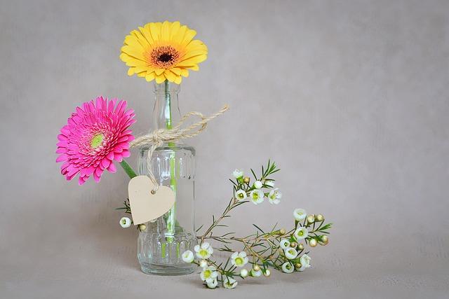 Flowers, Gerbera, Petals, Yellow, Pink, Frangipani